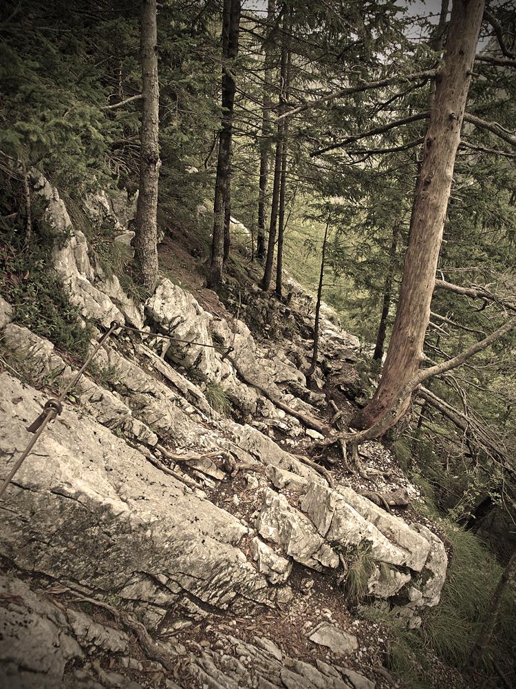 Growing on Rocks